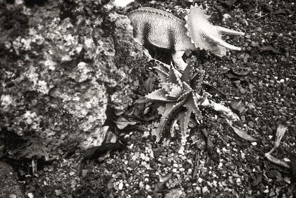 Dinosaur no. 3 (2008) © Sheila Newbery