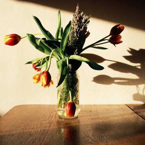 Tulips (Berkeley, 2008) © Sheila Newbery
