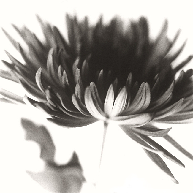 Untitled (silver gelatin print, 2010) © Sheila Newbery