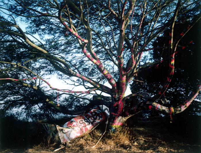 The Painted Tree (Albany Bulb, 2010) © Sheila Newbery