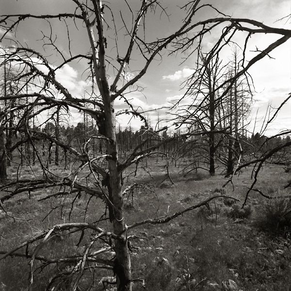 Untitled (Kaibab National Forest, 2011) © Sheila Newbery
