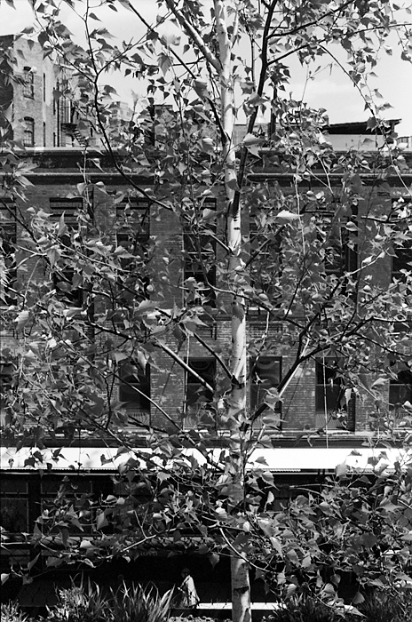 Facade through the trees (The High Line, 2011) © Sheila Newbery