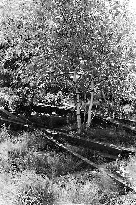 Tracks and Trees (The High Line, 2011) © Sheila Newbery