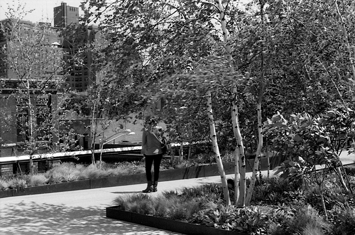 Standing in the Willow Grove  (The High Line, 2011) © Sheila Newbery