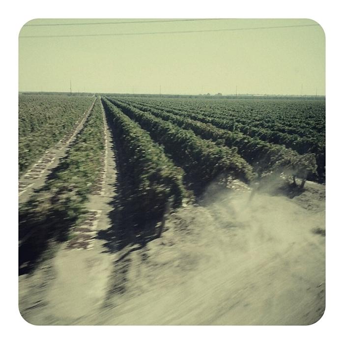 Orchards (2011) © Sheila Newbery