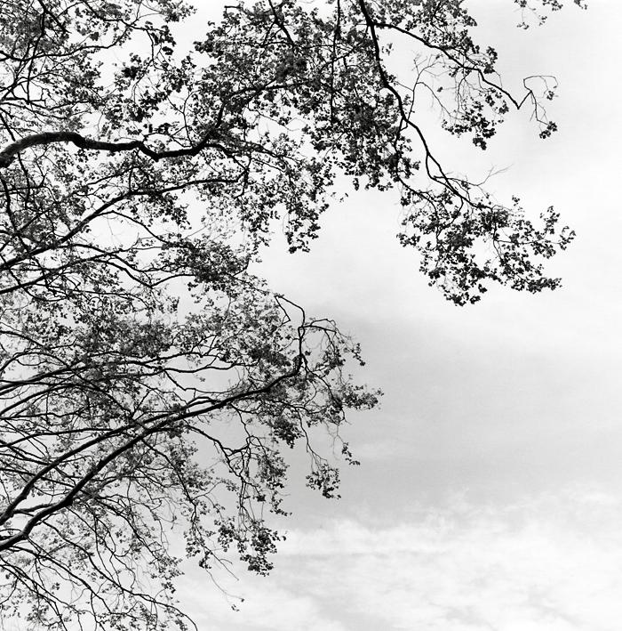 Before the winds (Berkeley, 2010) ©  Sheila Newbery
