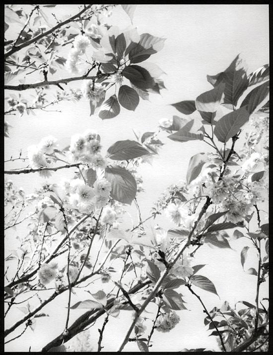 Branches, no. 1 (Berkeley, 2011) © Sheila Newbery