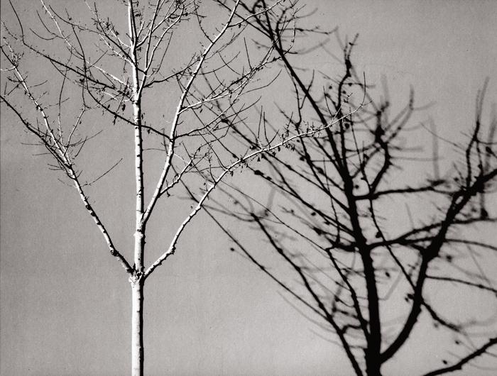 The studio tree (platinum palladium print, 2013) © Sheila Newbery