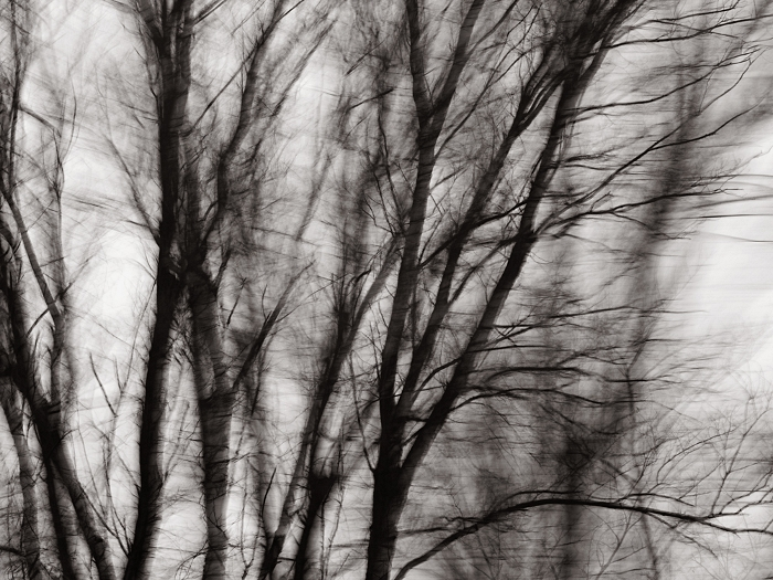 "Snowstorm, Ohio (palladium print, 10 1/2x15"") 2013 © Sheila Newbery"