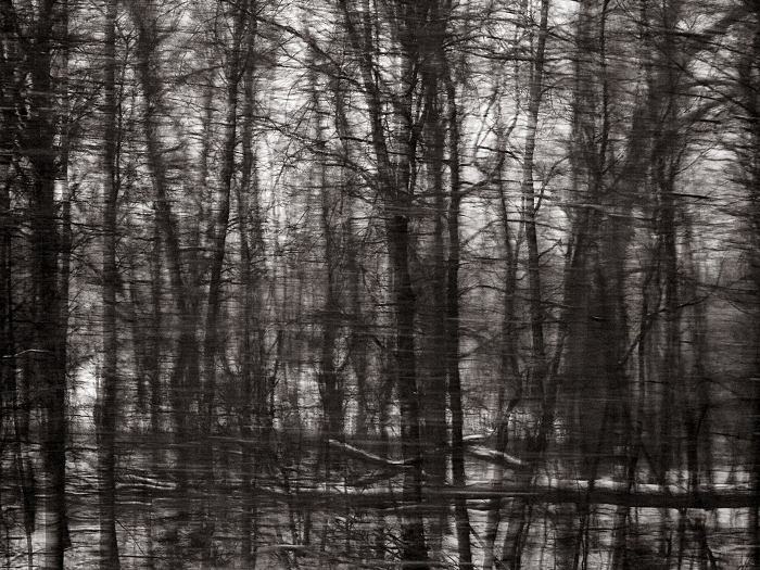Ohio woods, 2013 © Sheila Newbery