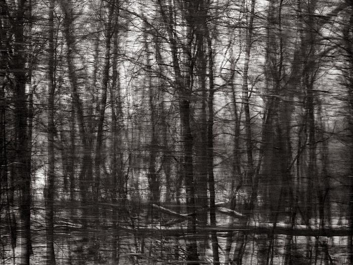 Ohio woods, 2013 © Sheila Newbery