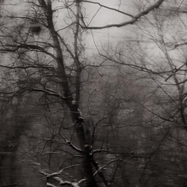 """Squirrel's nest (platnum palladium print) from  """"Ohio Woods"""""""