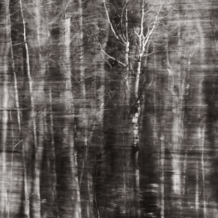"from *Ohio Woods* (palladium print, 10x10""), 2013"