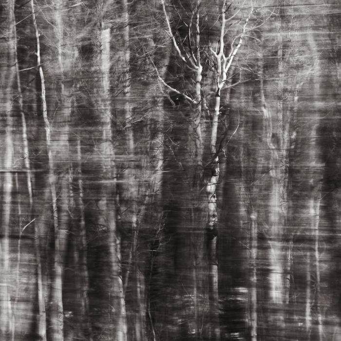 "from *Ohio Woods* (palladium print, 10x10""), 2013"